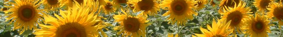 Sunflower Savannah banner
